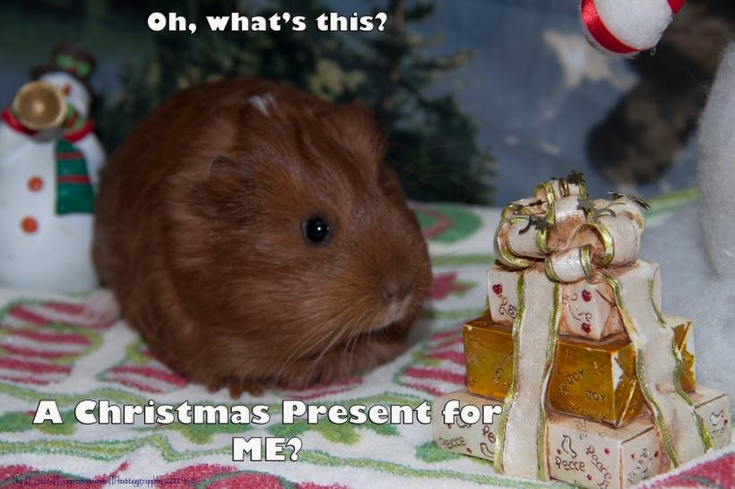 christmasgingerme
