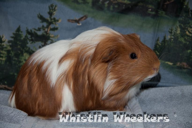 whistlinwheekie-5-of-24